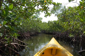 Kayak Mangroves